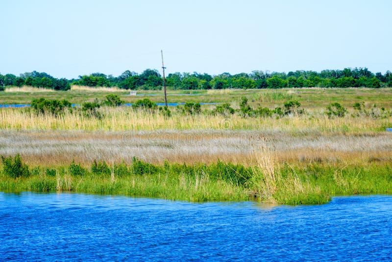 Humedales del pantano de Luisiana imagenes de archivo