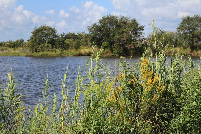 Humedales del pantano de Luisiana imagen de archivo libre de regalías