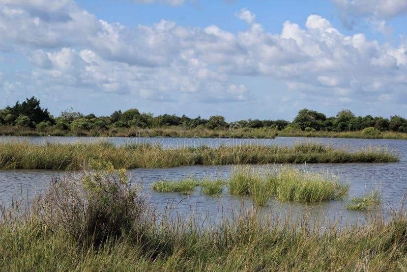 Humedales del pantano de Luisiana fotografía de archivo
