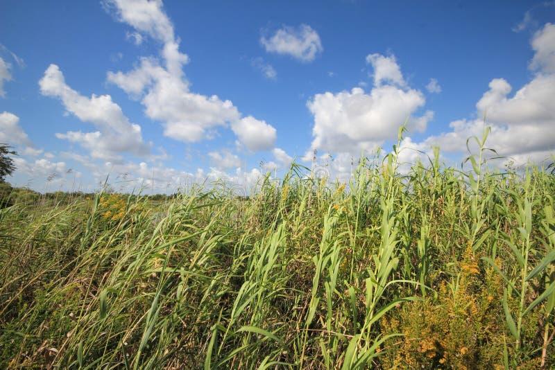 Humedales del pantano de Luisiana fotos de archivo