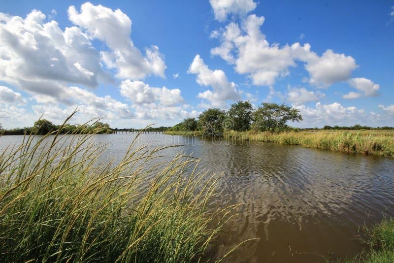 Humedales del pantano de Luisiana foto de archivo