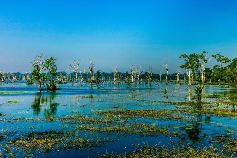Humedales en el templo flotado, Siem Reap, Camboya imágenes de archivo libres de regalías