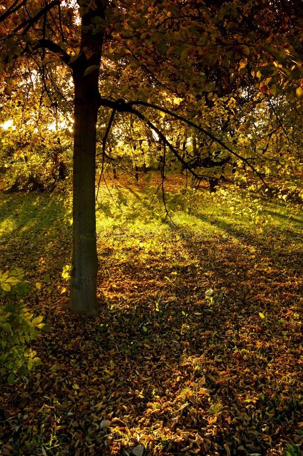 Humeur d'automne photo stock