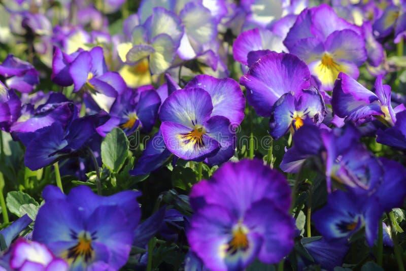 humeur de fleuron de rMeet images stock