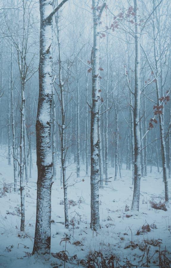 Humeurig de winterbos in Noord-Zeeland, Denemarken stock foto's