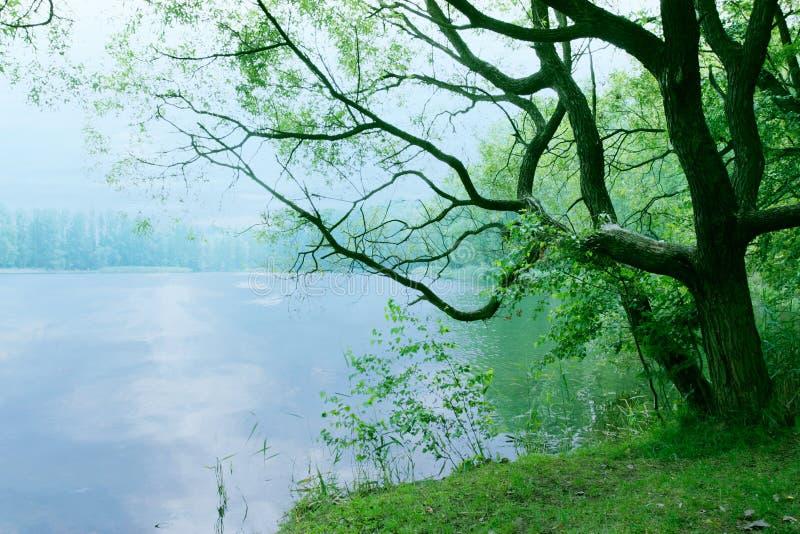 Humeurig landschap met oude boom en meer in de ochtend als aard achtergrondbehanglandschap stock afbeeldingen
