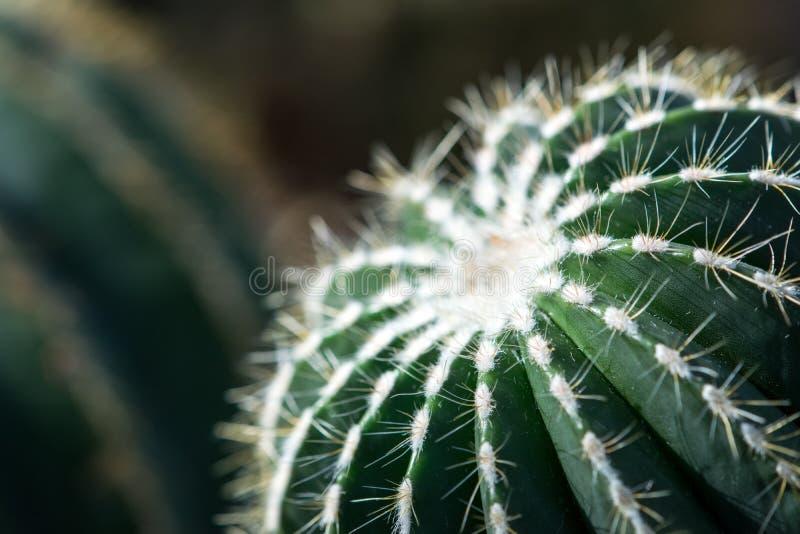 Humeurige Cactusmacro stock afbeeldingen