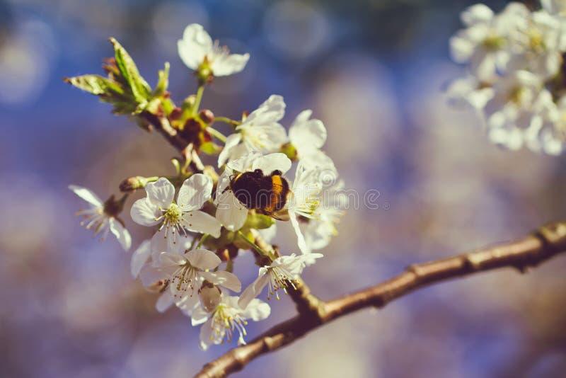 Hummel, die auf einer Blume sitzt stockfotos