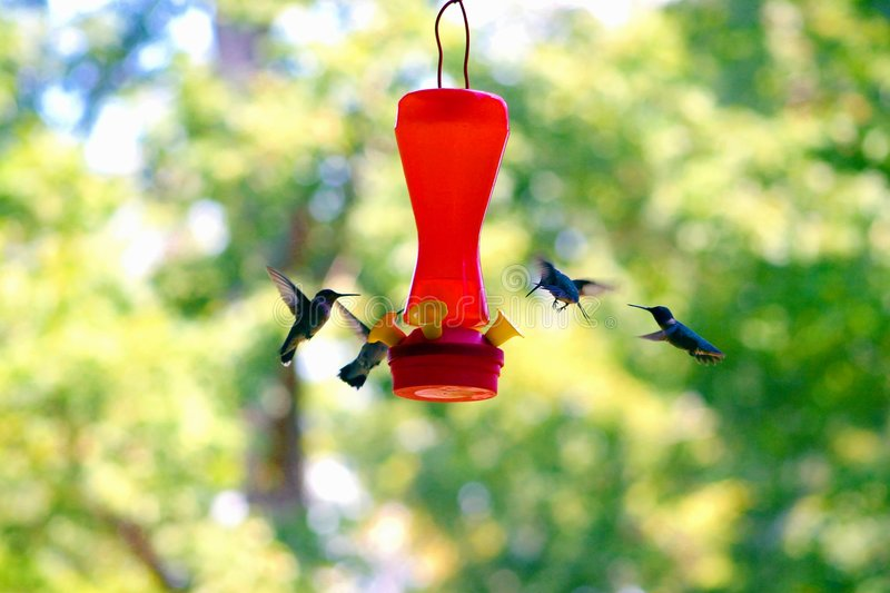 Download Hummer3 stock image. Image of hummers, wings, birds, syrup - 278411