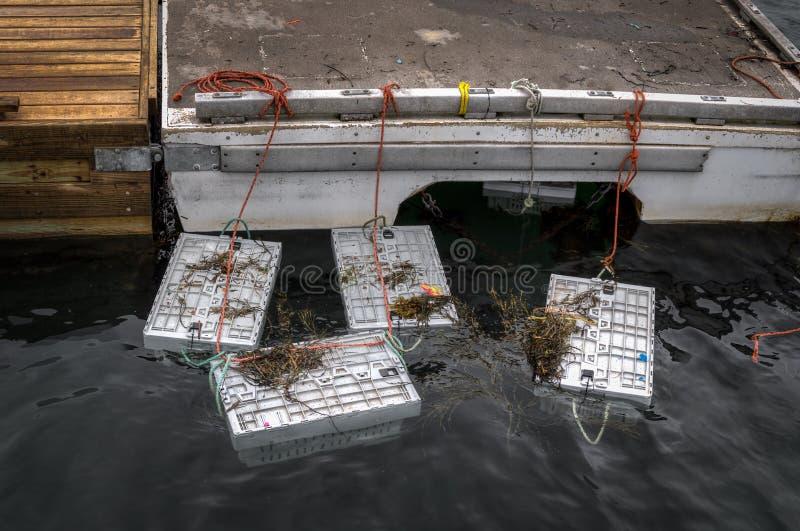 Hummerbehälter an Dock befestigt stockfotografie
