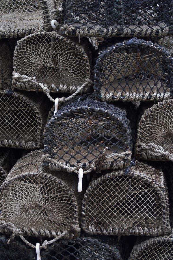 hummerkrukar royaltyfri foto