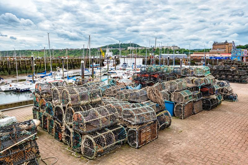 Hummerkrukor på den Scarborough hamnen, Yorkshire, England royaltyfri fotografi