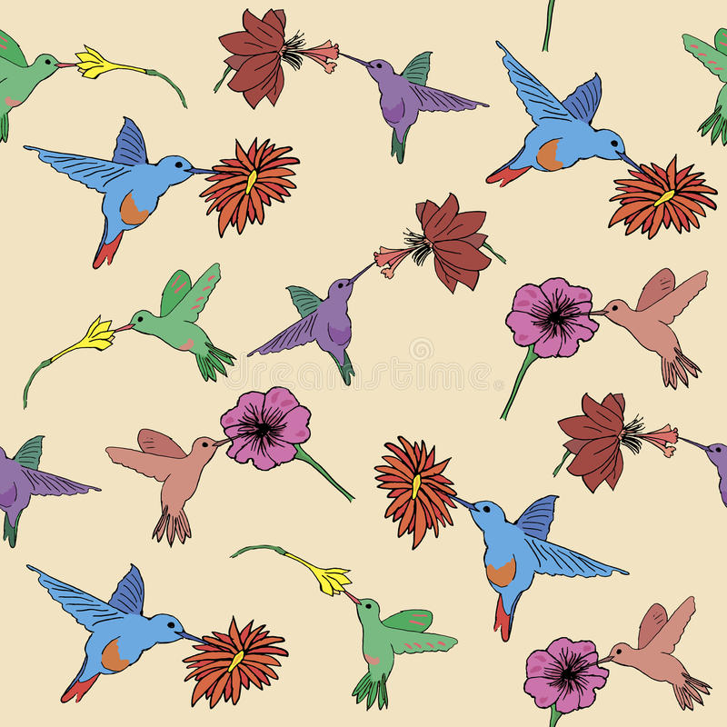 Hummigbird e flores tropicais sem emenda fotografia de stock royalty free