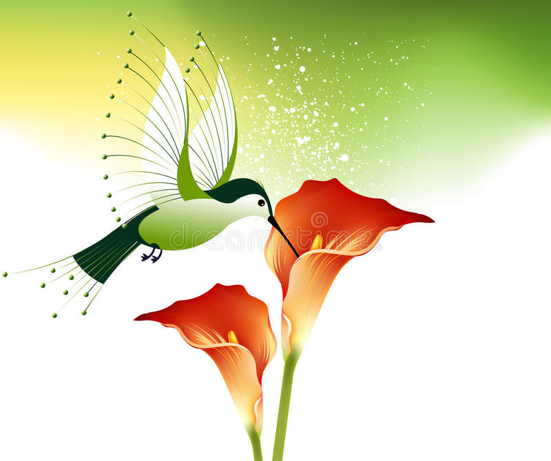 Download Humming bird and flowers stock vector. Illustration of feeder - 12572275