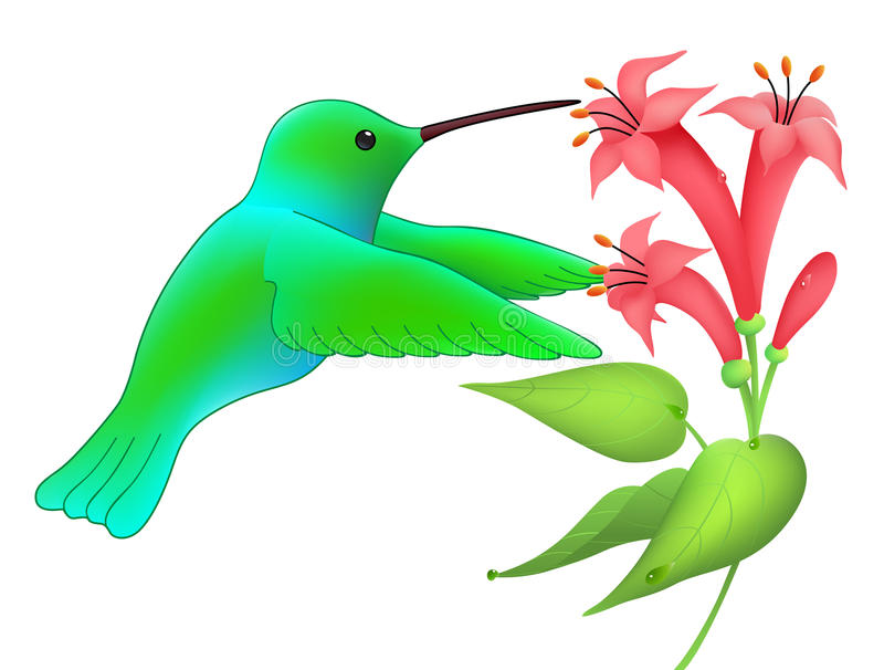 hummingbird ilustracja wektor