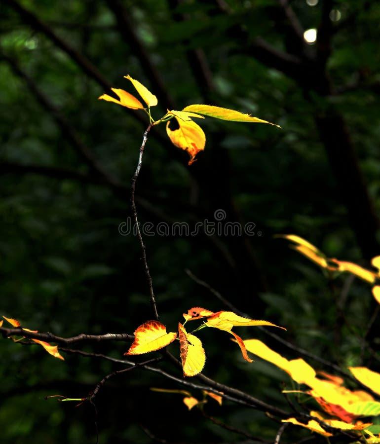 hummingbird fotos de stock royalty free