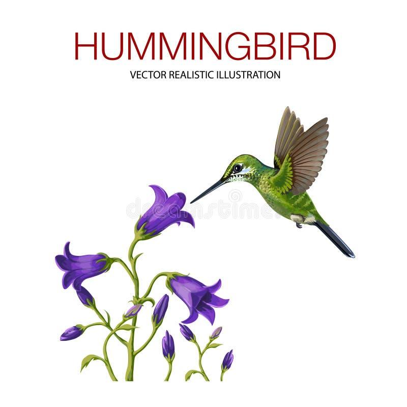 hummingbird royaltyfri illustrationer