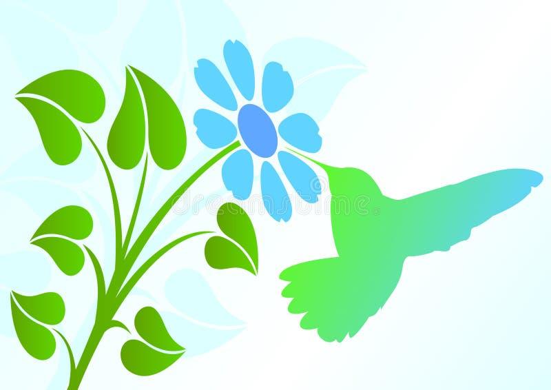 hummingbird бесплатная иллюстрация