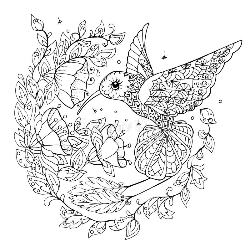 Download Hummingbird Coloring Book Stock Vector Illustration Of Adult