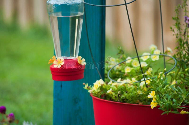 Hummingbird dozownik na pomidorowej klatce obraz stock