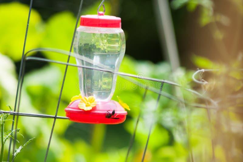 Hummingbird dozownik z osą zdjęcie royalty free
