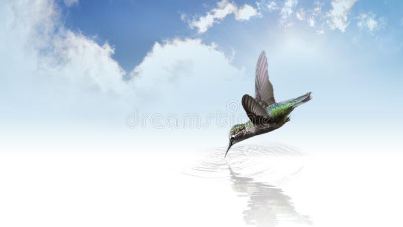 Hummingbird Drinking Water Free Public Domain Cc0 Image