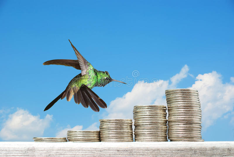 Hummingbird hovering over piles of coins. Against blue sky background, financial concept royalty free stock photos