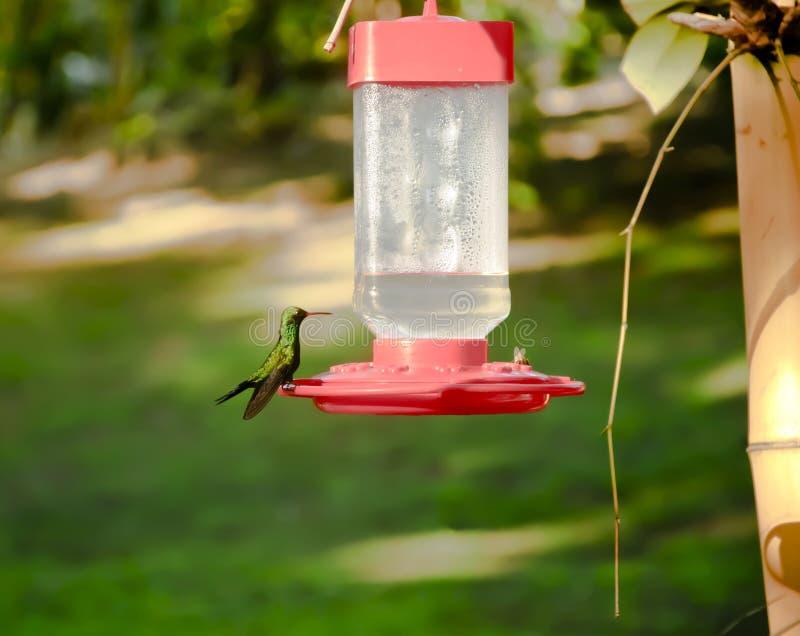 Hummingbird and bee sitting on Bird feeder royalty free stock photo