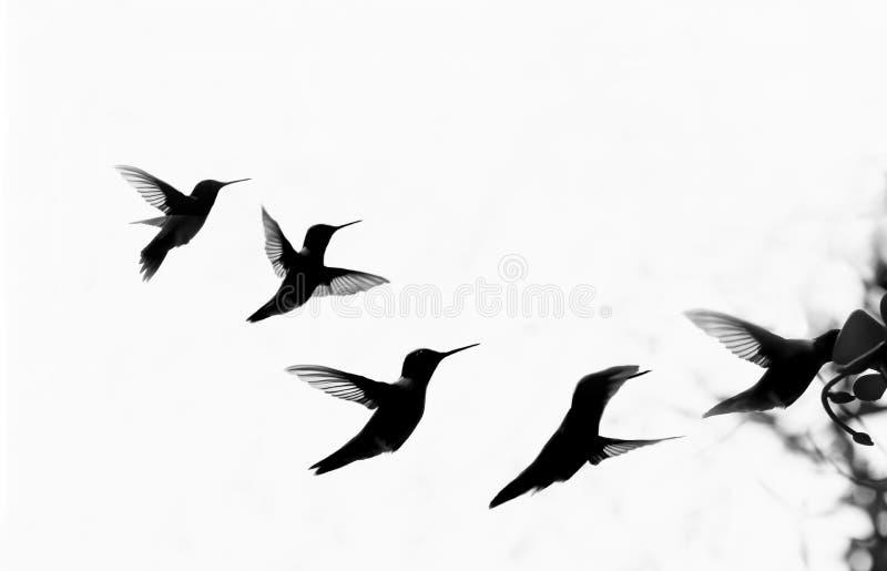 Hummingbird sylwetki latanie przy dozownikiem fotografia stock