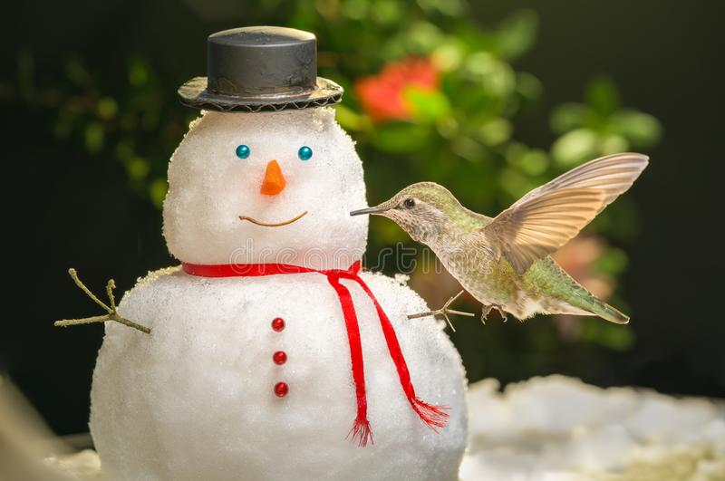 Do you want to kiss a snowman. Hummingbird visits a mini snowman; kissing; happy; lovely; childhood; holiday inspiration; bird watching activity stock images