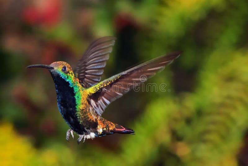 hummingbird ziemia zdjęcia stock