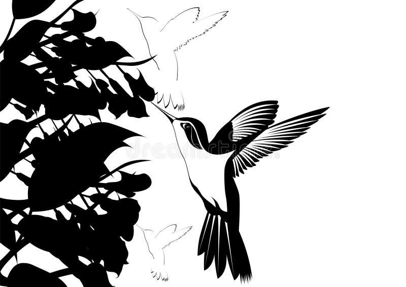 hummingbirds royaltyfri illustrationer