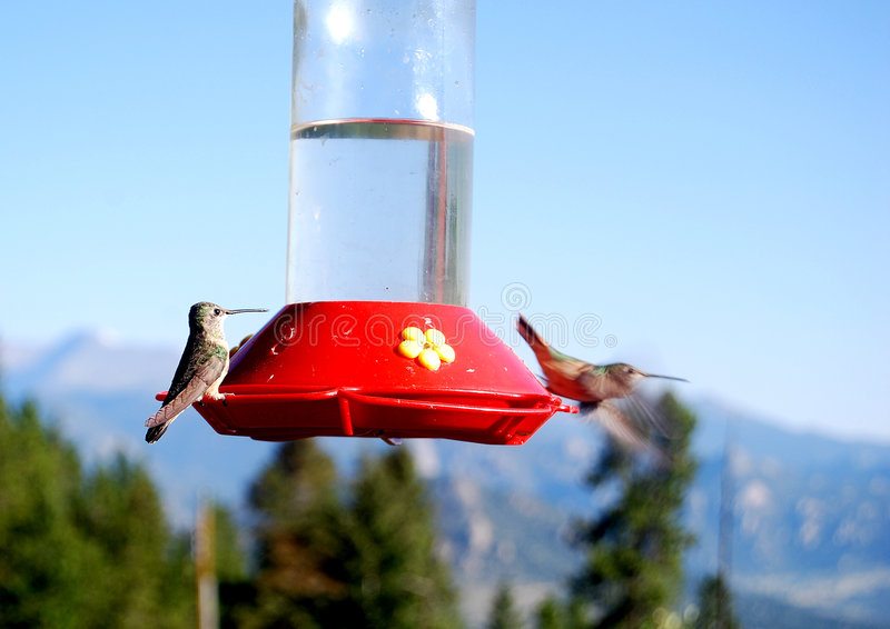 Download Hummingbirds stock photo. Image of colorado, small, feeder - 6990830