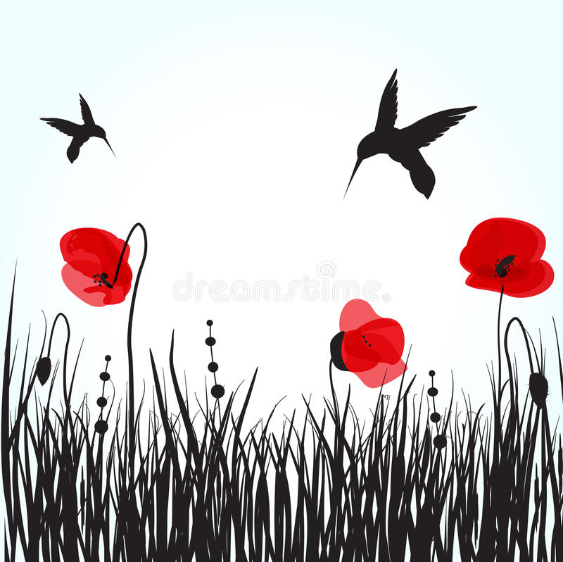 Free Hummingbirds And Poppies Flowers Royalty Free Stock Images - 15830209