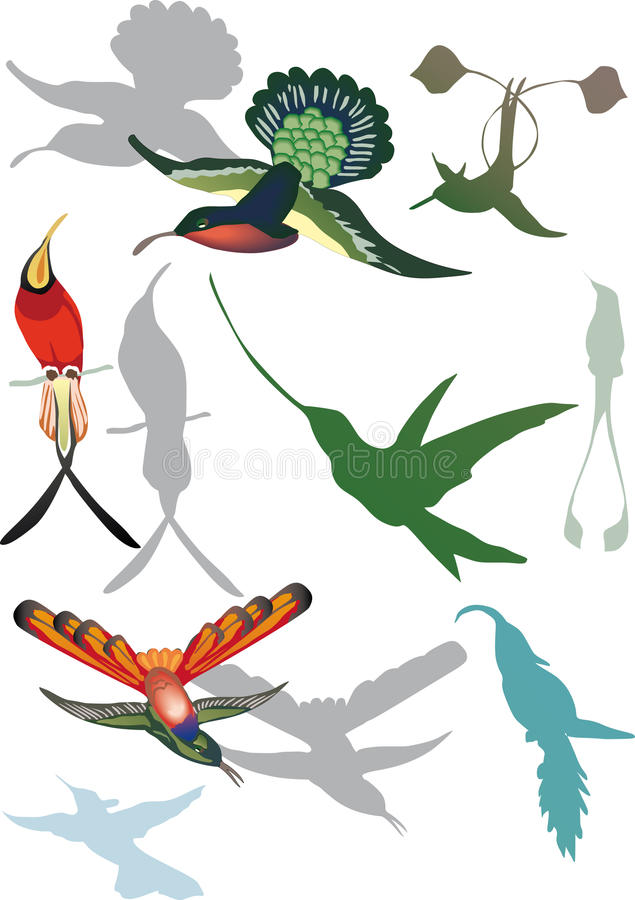 Download Hummingbirds Collection On White Stock Vector - Image: 16907778