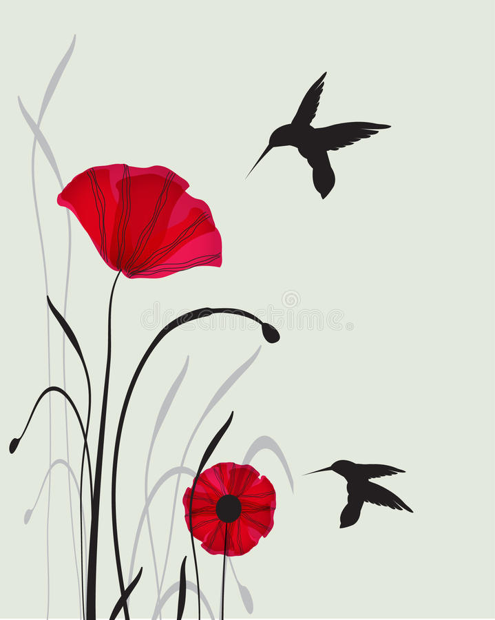 Hummingbirds and poppies stock images