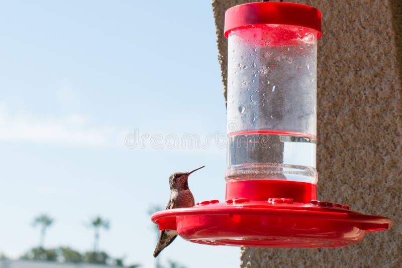 Hummingbirds sadza na czerwonych dozownikach obraz royalty free