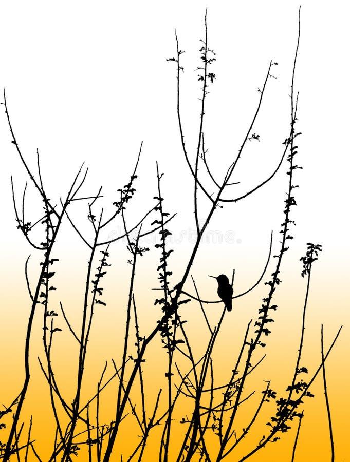 hummingbirdsilhoutte royaltyfri illustrationer