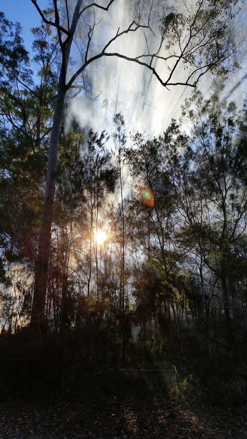 Humo en árboles fotografía de archivo