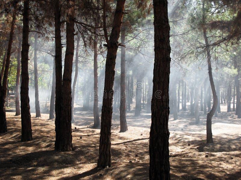Humo En Bosque Imagen de archivo libre de regalías