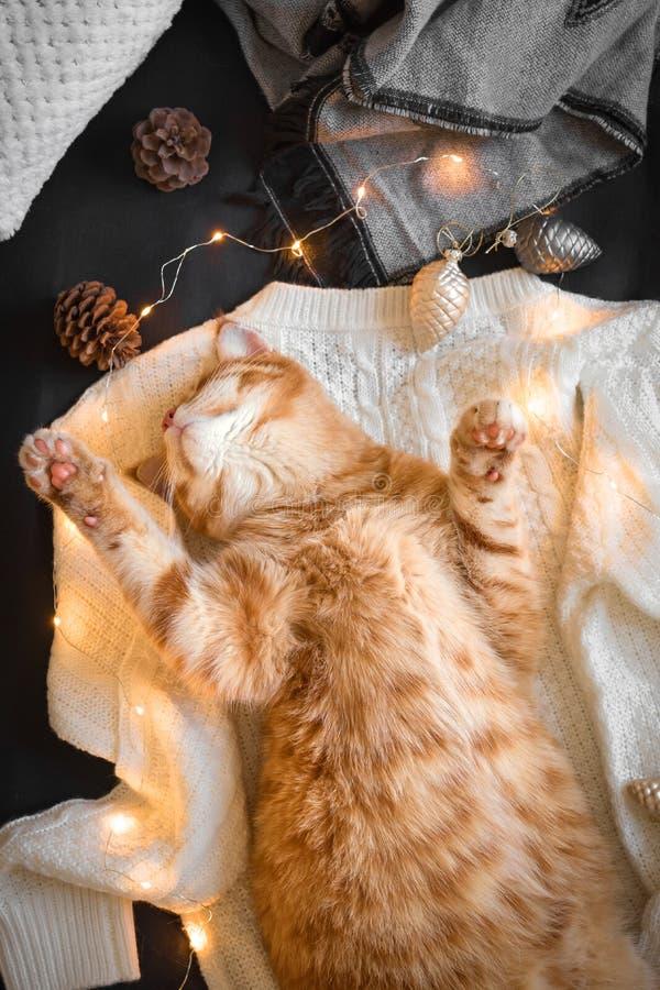 Humor de la Navidad con el gato del jengibre foto de archivo