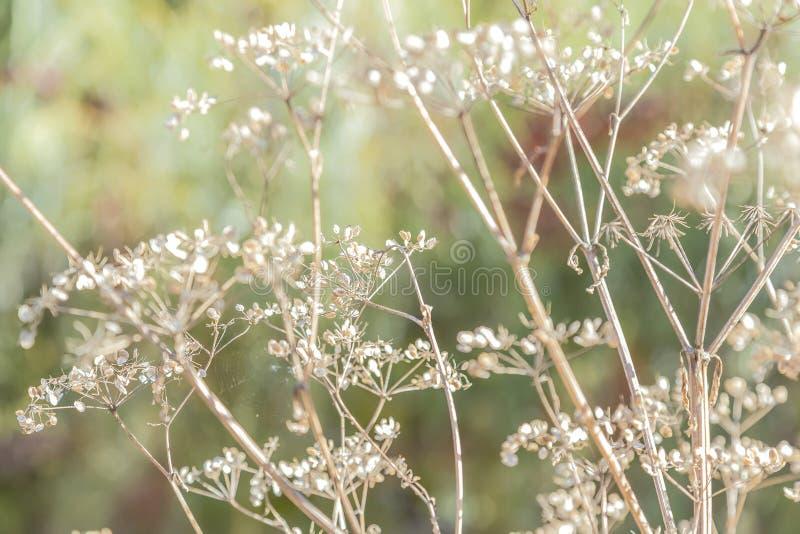 Humor del otoño, estaciones El fondo de la planta seca natural ramifica o imagen de archivo libre de regalías