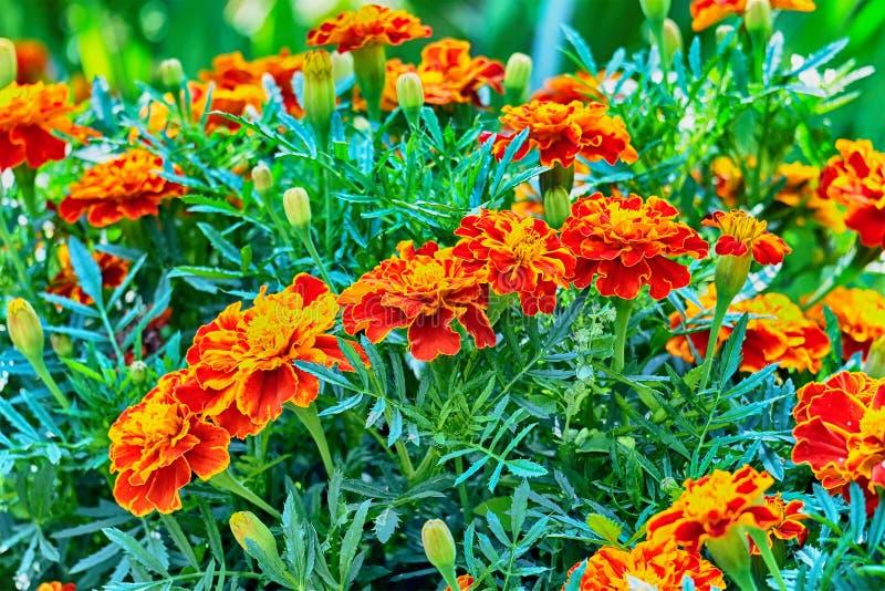 Humor do verão e cores do verão foto de stock