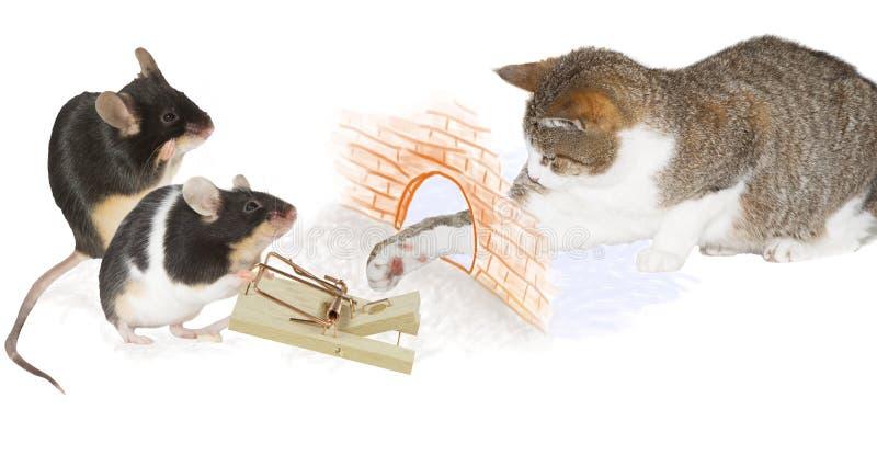 Katzenfalle stockfotografie