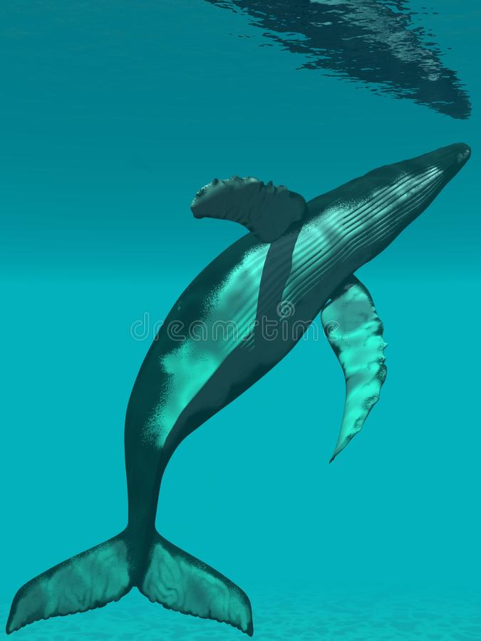 humpback φάλαινα διανυσματική απεικόνιση