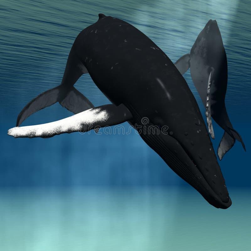 humpback φάλαινα απεικόνιση αποθεμάτων
