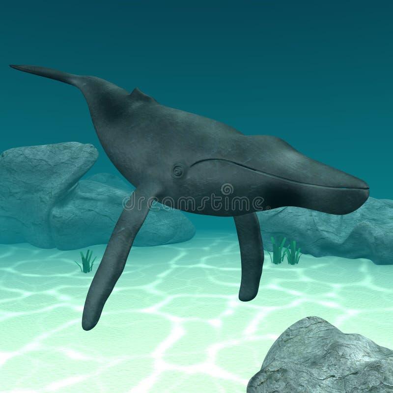 humpback διανυσματική απεικόνιση