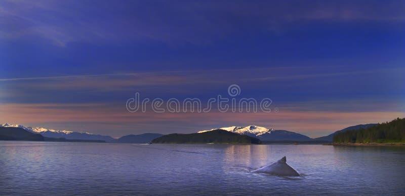 Humpback Solitude stock image