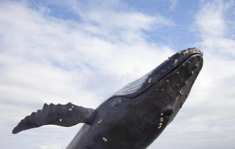 Humpback whale with blue sky. Humpback whale with clear blue sky royalty free stock photo