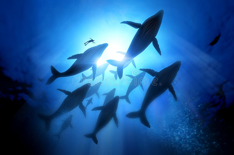 Humpback Whale Migration royalty free illustration